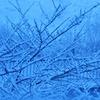 今日の雪景色