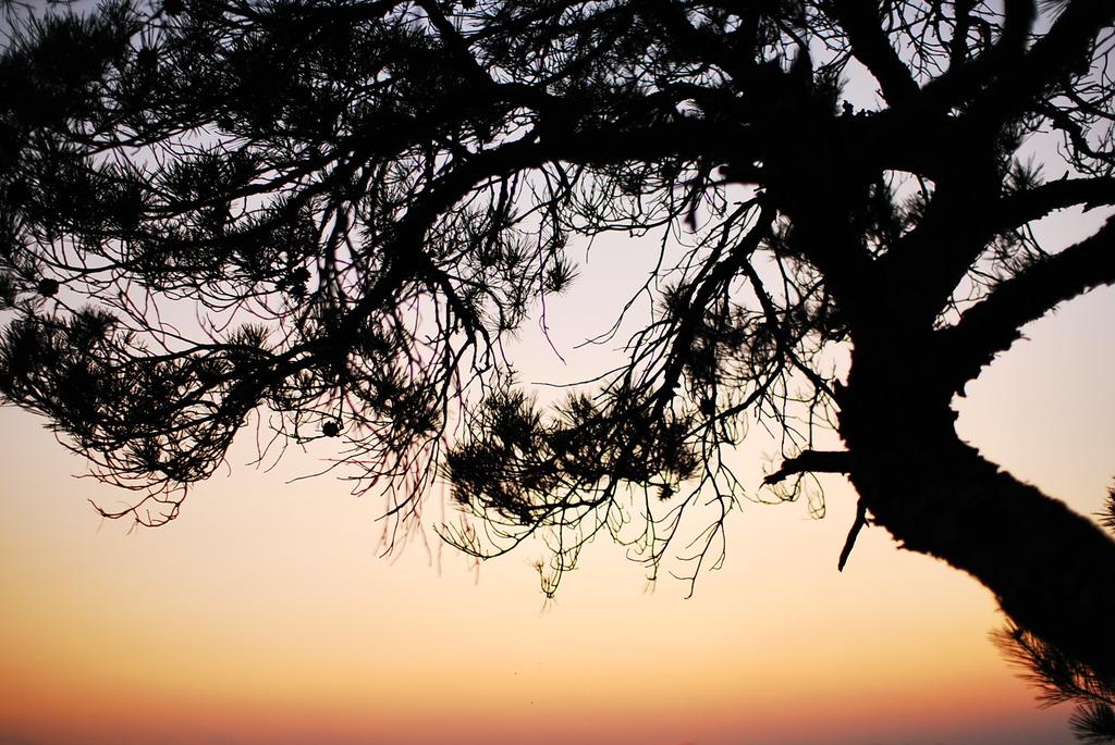 夕日を眺む
