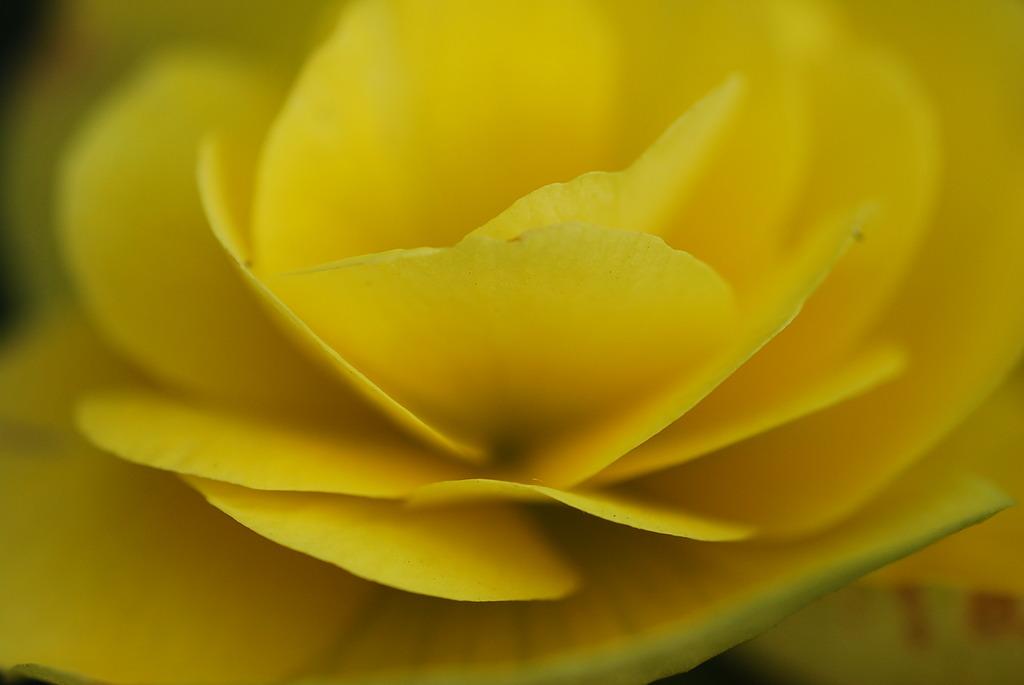 黄色のグラデーション