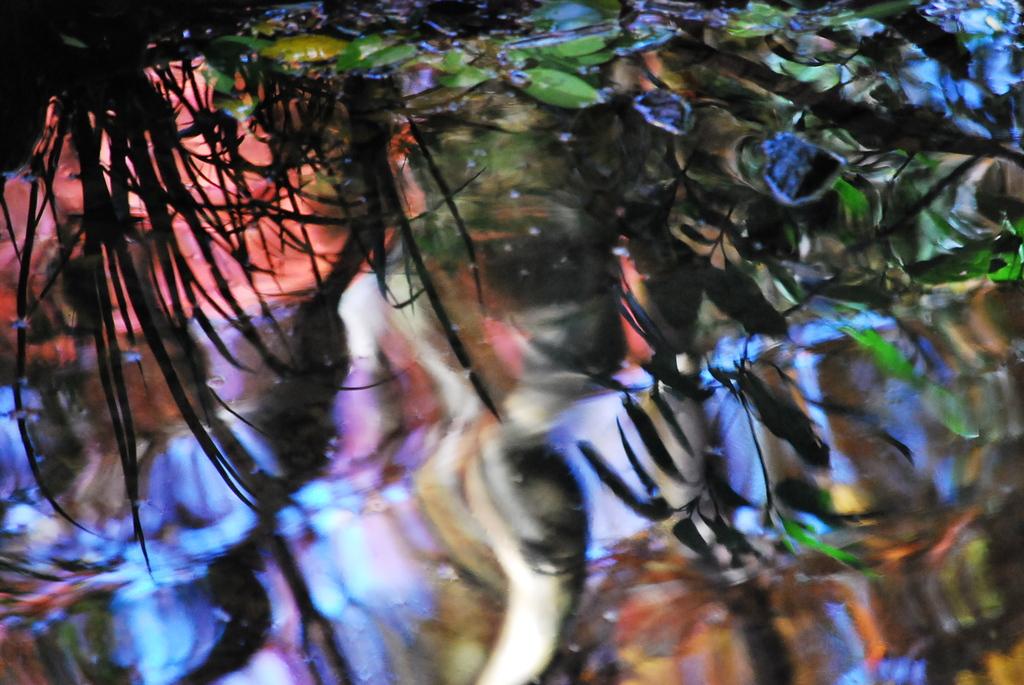 池の揺らぎ