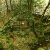 春日山原始林2