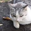 ノラ猫のプライド