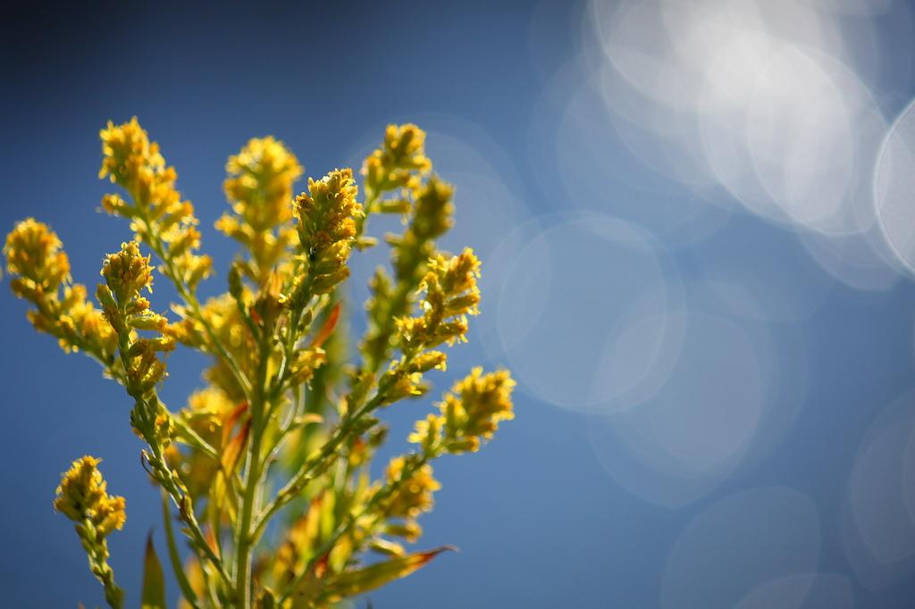 初冬の野花