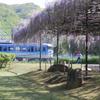 藤の咲く休日