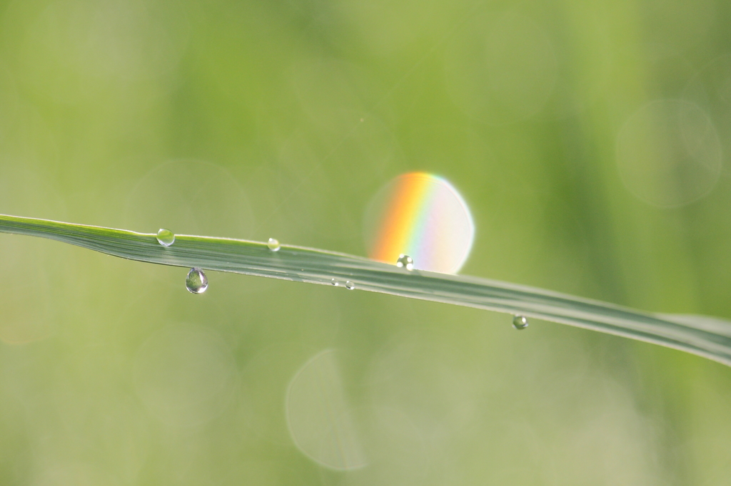 a rainbow in drop
