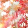 秋色カクテル