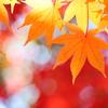 秋色に輝く