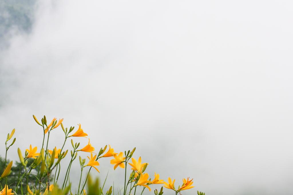 夏・雲上に咲く