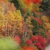 秋色を望む