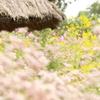 和の秋の花園