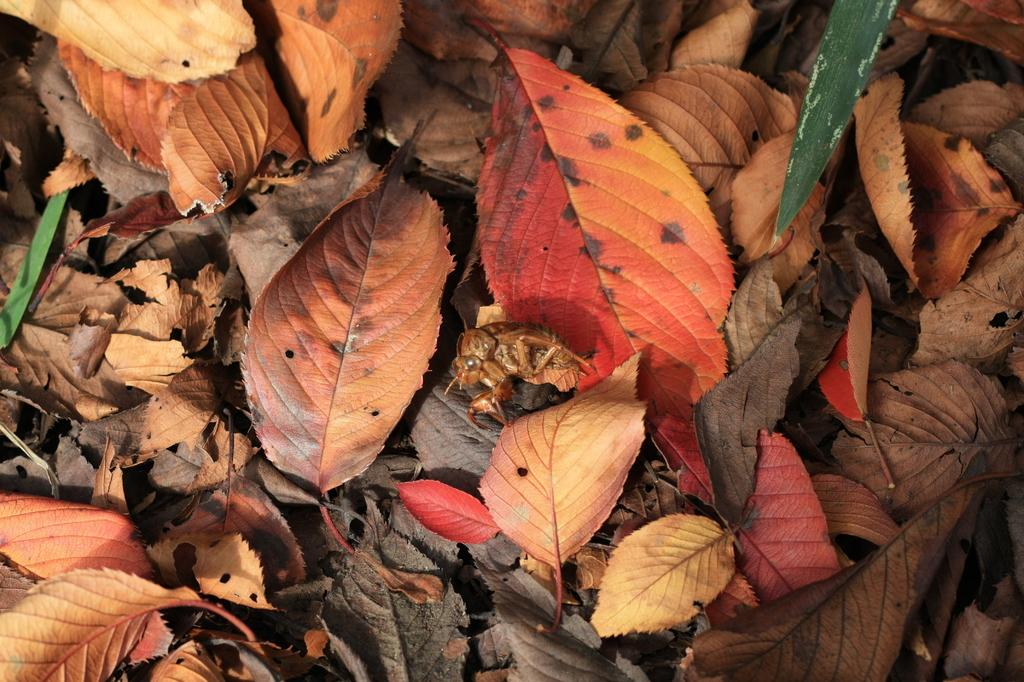 落ち葉の中に何かが・・