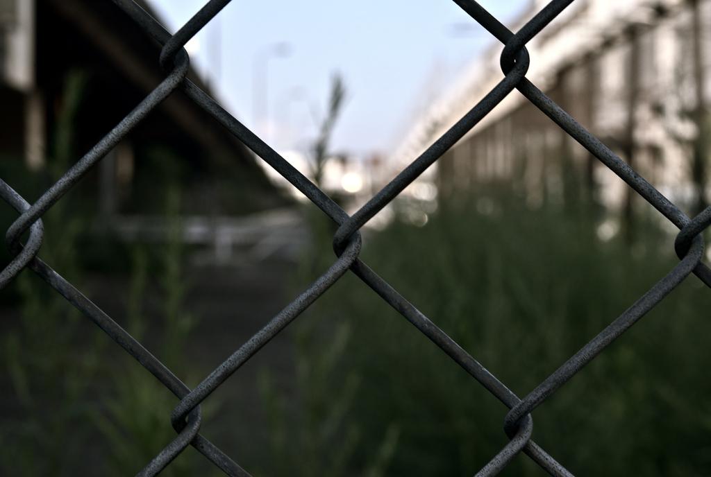 フェンスからの・・・