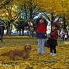 銀杏の樹の下で