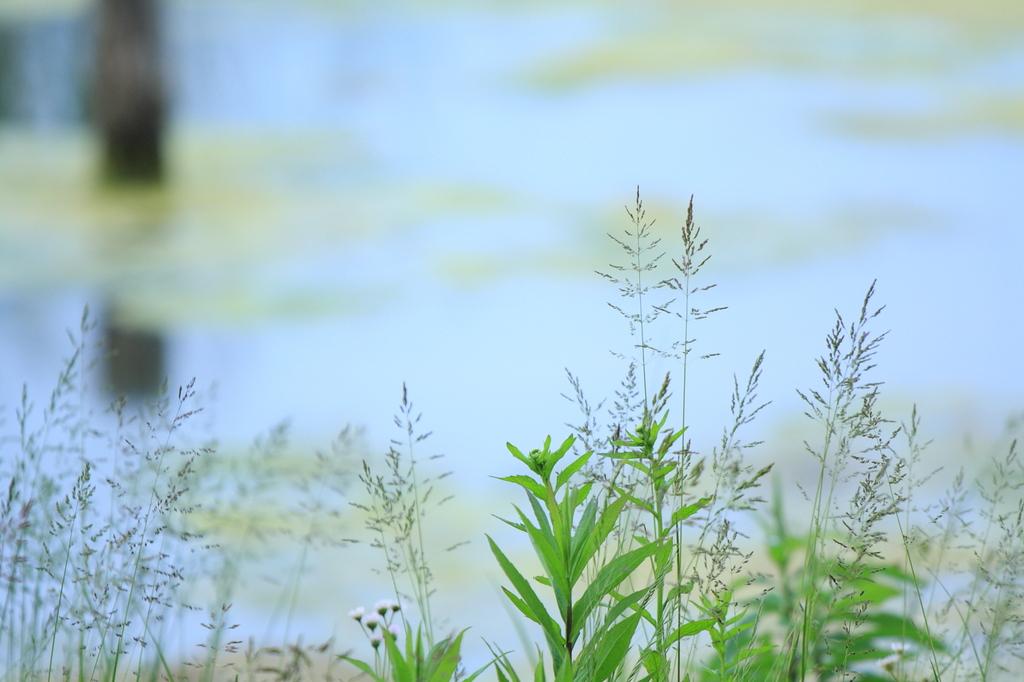 初夏の水辺