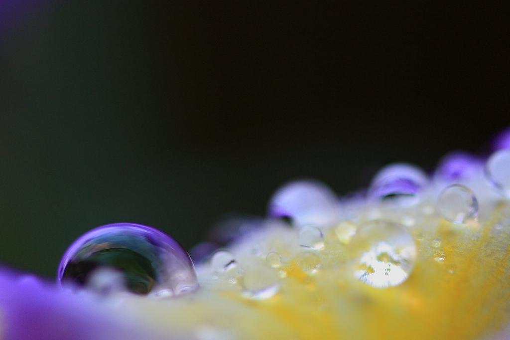 水玉ドーム