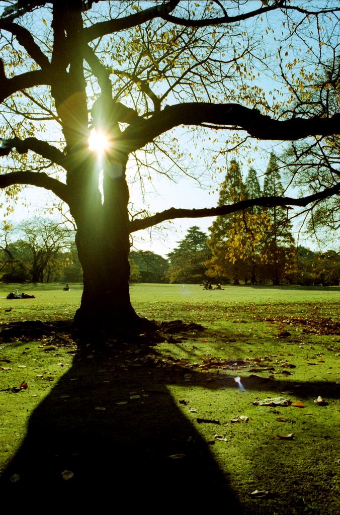秋の木シルエット