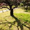 梅の木シルエット