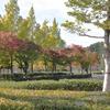 秋の総合公園