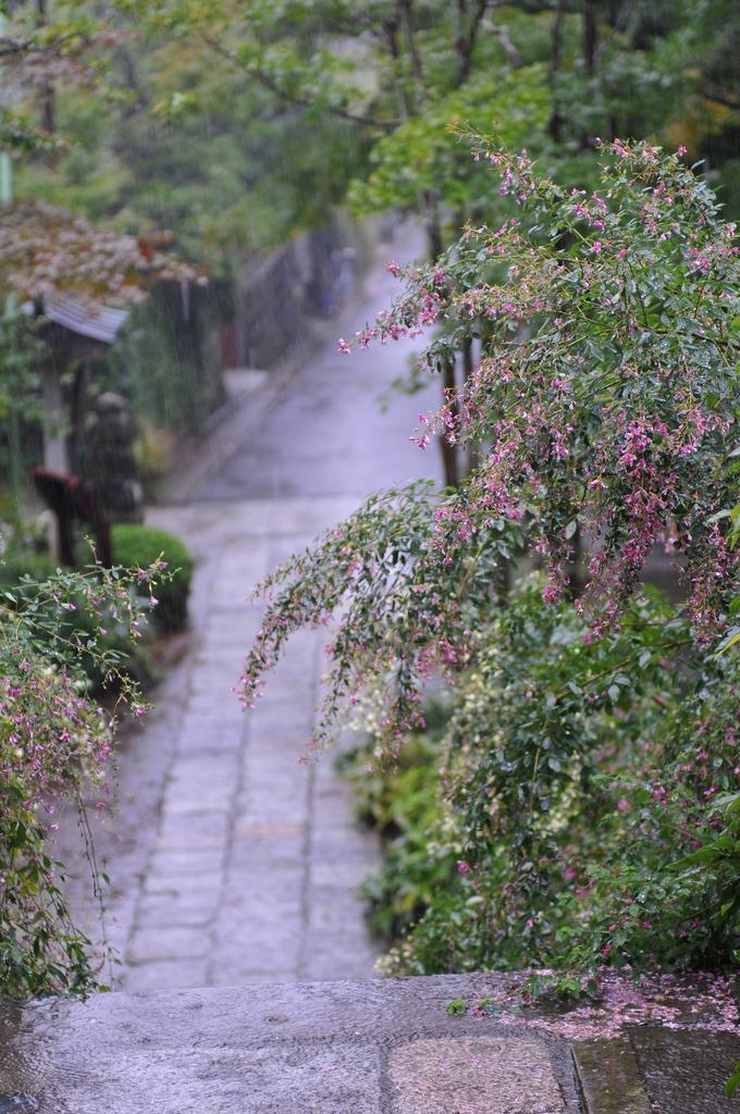 雨にうたれる萩