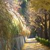 秋の散歩道②