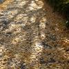 秋の散歩道③