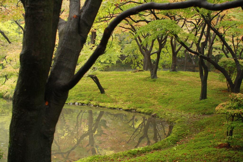 雨上がりの池