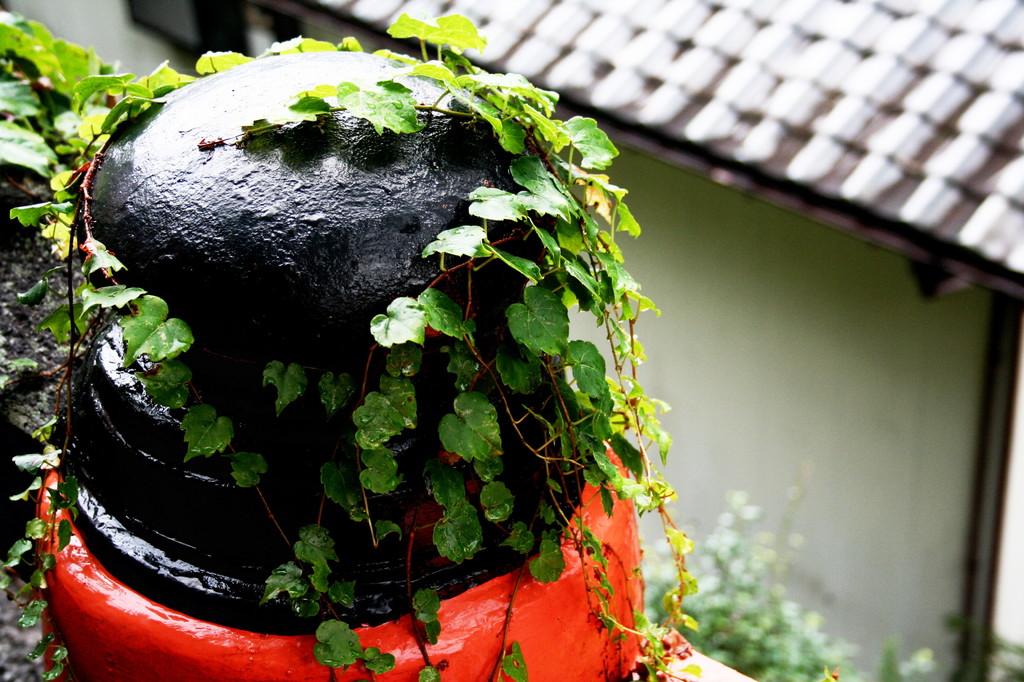 雨上がりのgiboshi
