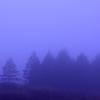 霧々・・・霧ヶ峰