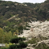 桜、懐かしの世界へ。