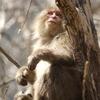上高地でお猿さんに遭遇