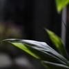 温泉の観葉植物