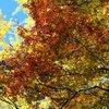 奈良公園 紅葉2009 ③