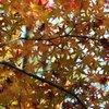 奈良公園 紅葉2009 ②
