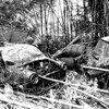 竹林の片隅