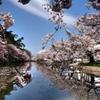 弘前の桜2010