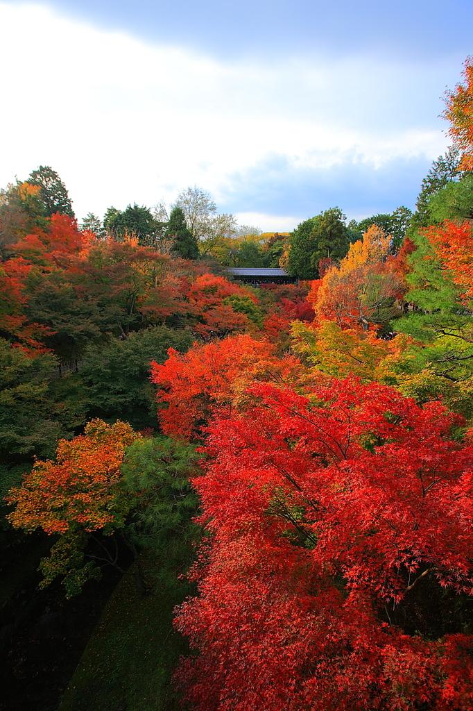 これぞ東福寺っていう