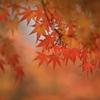 THE 紅葉