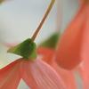やらかい色の花