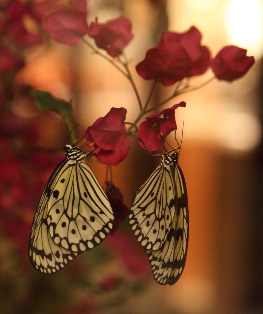 眠れる森の蝶