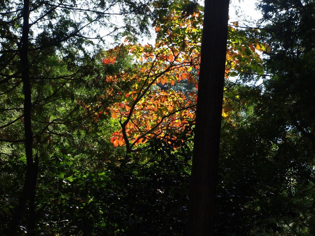 秋のおとずれ