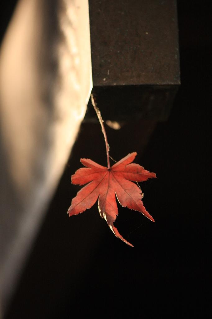 過ぎさりし秋