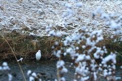 雪の中の白い鳥