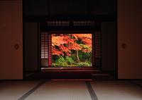 NIKON NIKON D300Sで撮影した(秋彩)の写真(画像)