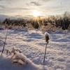 初冬雪原の賑わい