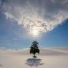 冬の大地に立つ