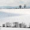 畝模様の丘