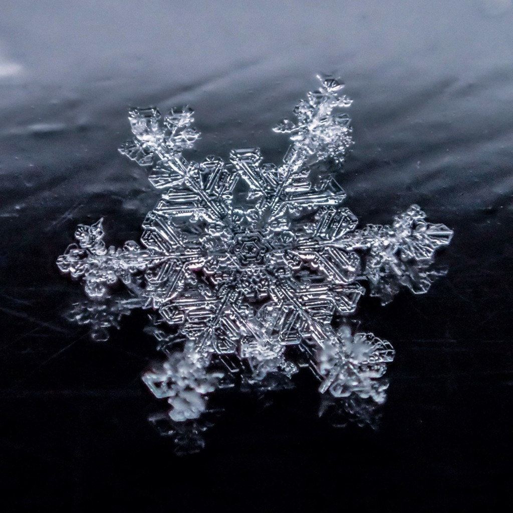 冬華 氷上の華
