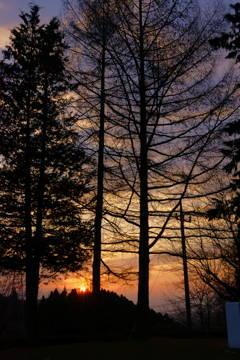 見上げる樹と見下ろす朝日