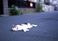 BRONICA SQ-Aで撮影した(猫)の写真(画像)