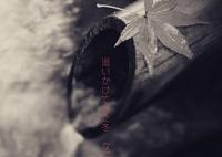 NIKON NIKON D5300で撮影した(紅葉っ撮れなかった~~)の写真(画像)